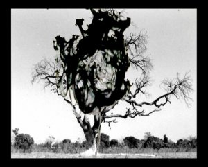 06. Charley CASE - Video - Atomic tree - 2006 | video dvd-r | 3 min 33 | (...)